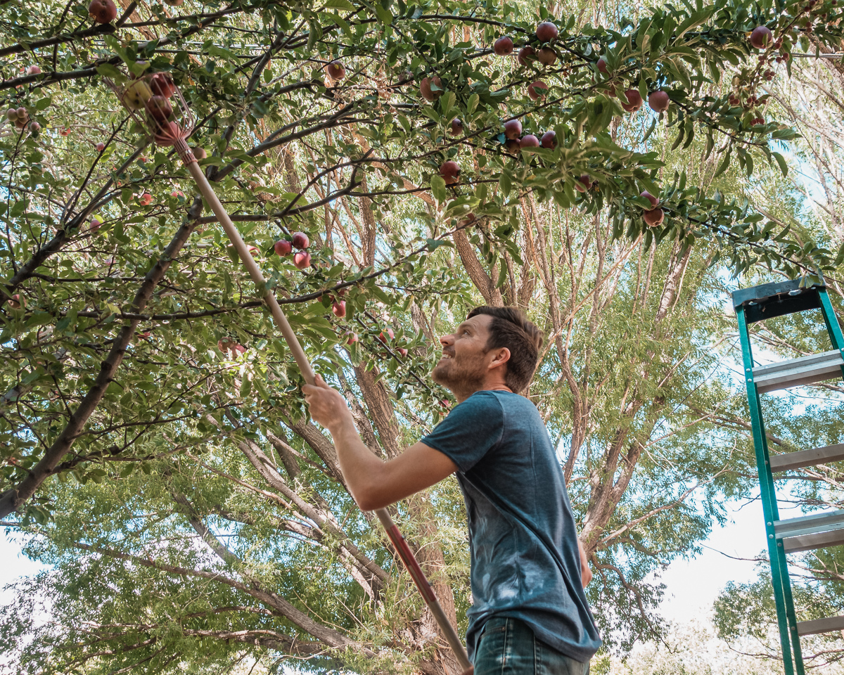 jason wynn picking apples