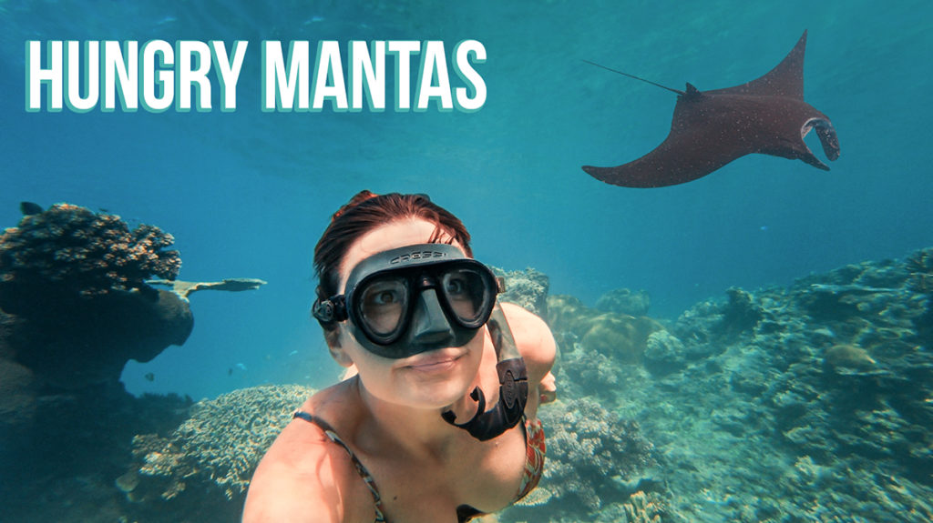 nikki wynn swimming with mantas in fiji