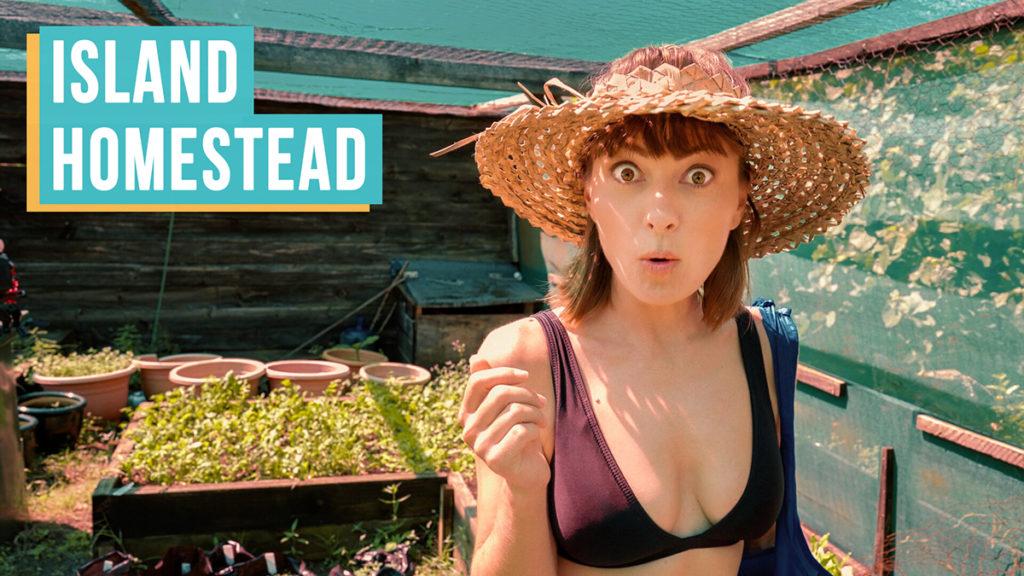 nikki wynn surprised at island homestead